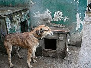 Kto wiesza psy na schronisku?